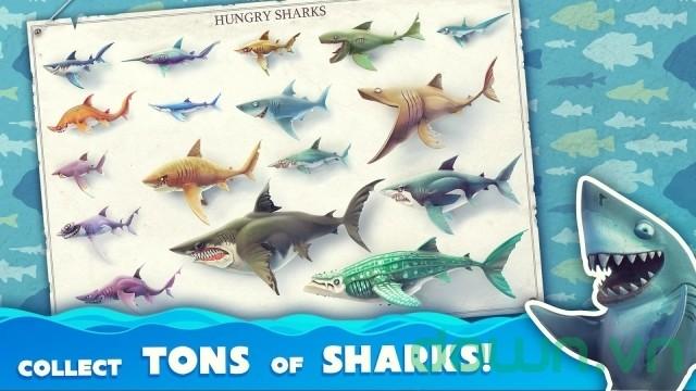 Bộ sưu tập cá mập của game Hungry Shark World