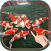 Japanese Koi Fish Wallpaper cho Android