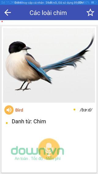 Các loại chim